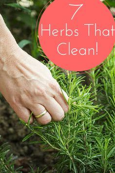 Unexpected cleaning supplies! Herbs to help you clean the house