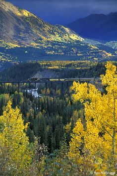 The Alaska Railroad crossing the trestle at Denali National Park.