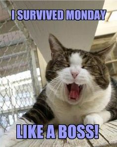 I am a boss?