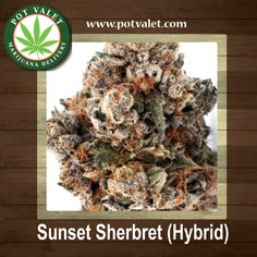 Sunset Sherbet is one of the most flavorful and unique tasting medical marijuana strains on the market today. Relieve from Stress, tension, and sour moods with this rich hybrid.#LosAngeles #PotValet #California #MedicalMarijuana #SunsetSherbet #marijuanastrains