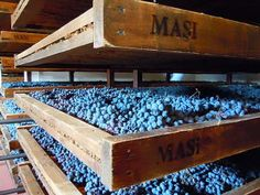 Amarone  in the making at Masi in Valpolicella