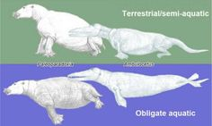 New index reveals likelihood of terrestrial or aquatic lifestyles of extinct mammals | Geology Page