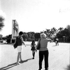 Zoo visitors at the Crandon Park Zoo - Miami, Florida