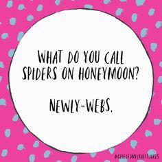 What do you call spiders on honeymoon? Punny Puns, Puns Jokes, Corny Jokes, Stupid Jokes, Memes Humor, Funny Humor, Funny Stuff, Bad Dad Jokes, Funny Jokes For Kids