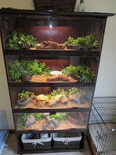 Herp Homes!You can find Reptile enclosure and more on our website.Herp Homes! Reptile Habitat, Reptile House, Reptile Room, Reptile Cage, Lizard Habitat, Terrarium Diy, Terrarium Reptile, Vivarium, Gecko Cage