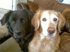 My dogs Sebatstian and Savannah. Jennifer, Charlottesville, VA - 8/1/2015