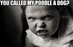 YOU CALLED MY POODLE A DOG? (Had to pin this, just because....! Lol)