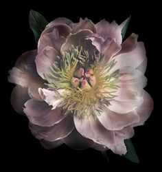Bloom by Anuschka has the perfect home accessories to complete any room's interior design. Art Floral, Big Flowers, Beautiful Flowers, Exotic Flowers, Fresh Flowers, Purple Flowers, Rose Foto, Floral Photography, Foto Art