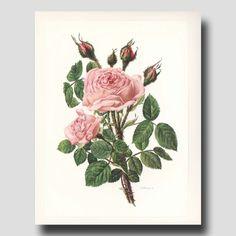 Vintage Botanical Prints Pink Roses от ParagonVintagePrints