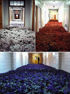 Anna Schuleit - Installation at Mental Health Center, Massachusetts.