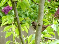 how to attract beautiful birds to your garden #birds