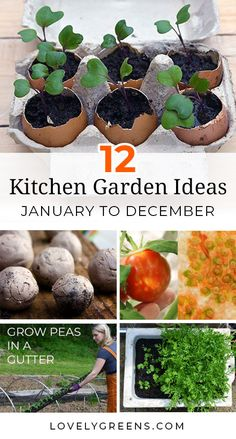 12 DIY kitchen garden ideas geared to give you a creative gardening activity for every month of the year. Whether youre reading this in January or July, jump into the project of the month to discover a new way to grow your own food #vegetablegardening #lovelygreens #gardenideas