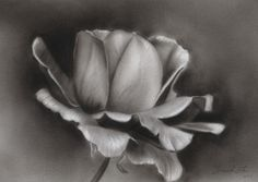 Supreme Portrait Drawing with Charcoal Ideas. Prodigious Portrait Drawing with Charcoal Ideas. Realistic Flower Drawing, Pencil Drawings Of Flowers, Realistic Pencil Drawings, Pencil Shading, Flower Sketches, Plant Sketches, Easy Charcoal Drawings, Charcoal Sketch, Charcoal Art