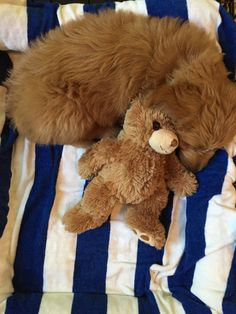 Baby and bear. August 2015