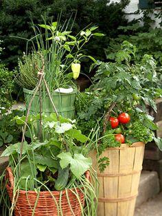 container vegetable garden  - Garden Ideas