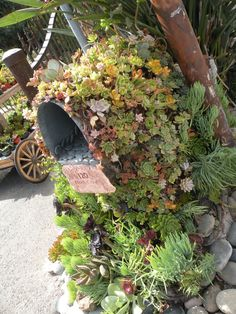 Succulents on a mail box...guess by this, they can be put just anywhere. So awesome, I love succulents!!