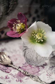 Heather Cottage ✿  the beautiful simplicity of hellebores.