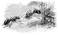 """Ants:  A well developed colony can be as deep as 30 feet, """"Walter Reeves on Georgia Gardener radio"""".Simply pour 2 cups of CLUB SODA (carbonated water) directly in the center of a fire ant mound. The carbon dioxide in the water is heavier than air & displaces the oxygen which suffocates the ants & queen. The whole colony will be dead in about 2 days.  Club soda leaves no poisonous residue, does not contaminate ground water, doesn't kill other insects, & is not harmful to pets."""