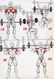 Image result for shoulder musculation