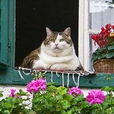 fat cat on window - Google Search