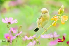 Photograph ~ act cute ~ by FuYi Chen on 500px