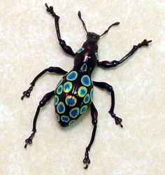 Pachyrrhynchus congestus Polka dot beetle weevil from Philippines...SO pretty and quite the fashionista!