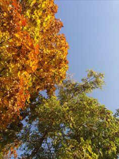 Őszi lomb / colorful autumn foliage