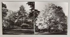 Ansel Adams (American, 1902-1984) Two Photographs - Commissioned by Andrew Wolfe.