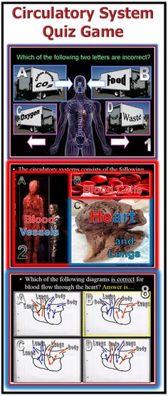 FREE Circulatory System Quiz Game. This review game PowerPoint has the students work in groups and answer 20 questions about the circulatory system. Answers are provided at the end. -Enjoy