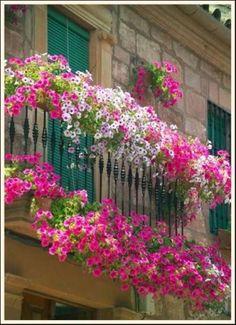 balcony flower ideas - Google Search