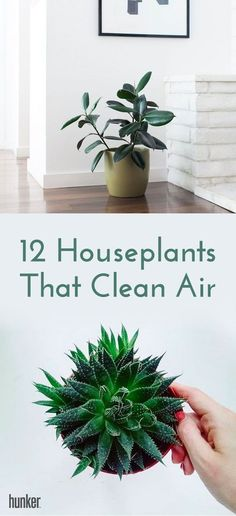 Did you know that there's a natural solution to cleaning these harmful contaminants from your home? Here's a simple way to launch an attack: Fill your house with the right houseplants and they'll do the work for you. These 12 are ready to do battle, beautifully.