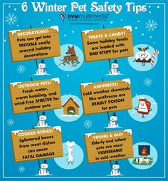 Winter holiday hazards for your furry friend to avoid.