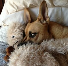 Abbey, our German Shepherd/Boxer mix playing with her Moose, rescued May 2013.