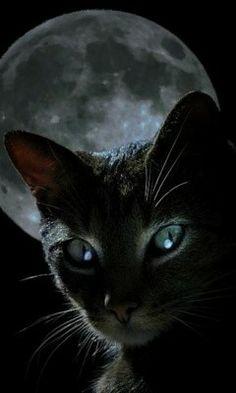 Chat noir avec pleine lune.                                                                                                                                                      Plus
