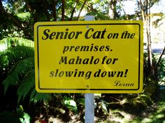 Senior cat ont he premises. Mahalo for slowing down.