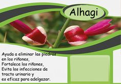 Alhagi # خارشتر # Barcelona, Vegetables, Food, Get Skinny, Essen, Barcelona Spain, Vegetable Recipes, Meals, Yemek