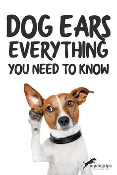 This is all you need to know about dog ears. You'll learn types, functions, fun facts, disorders and how to treat and care for dog ears. Diy Dog Bed, Cool Dog Beds, Dog Training Camp, Teach Dog Tricks, Hyper Dog, Dog Commands, Diy Dog Toys, Dog Health Tips, Aggressive Dog