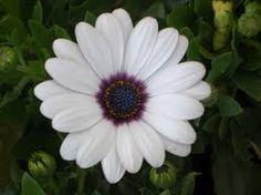 Image result for white flower images names