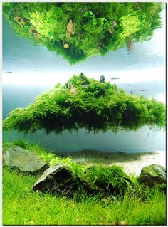 Think Floating Islands Are Only in Sci-Fi Movies? Think Again with Custom Aquascapes! - Okeanos Aquascaping - Avatar-Inspired Aquascapes wit...
