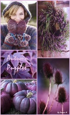 Autumn Purples By Sammie R