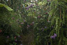 jim-powell-dixter-exotic-garden-4