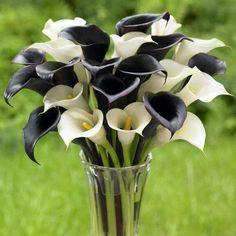 flores preto e branco
