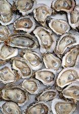 Raw oysters shucked by Miles Prescott