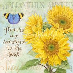 Risultati immagini per jane shasky cornflowers Sunflower Quotes, Sunflower Pictures, Sunflower Drawing, Sunflower Art, Decoupage Vintage, Decoupage Paper, Happy Flowers, Beautiful Flowers, Collage