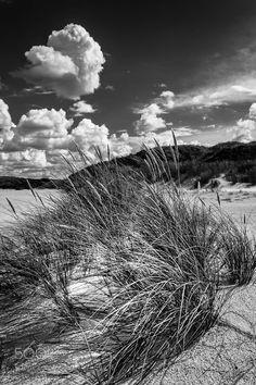 Beach grass  b&w by neupeters