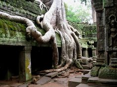 Photographic Print: Tree roots overtaking Ta Prohm at Angkor Poster by José Fuste Raga : Oh The Places You'll Go, Places To Travel, Places To Visit, Beautiful World, Beautiful Places, Jungle Temple, Cambodia Travel, Tree Roots, Angkor Wat