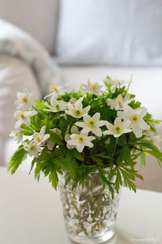 Sommarbacka Flowers For Mom, Fresh Flowers, Wood Anemone, Anemones, Fresh Green, Scandinavian Interior, Spring Time, Interior Decorating, Cottage
