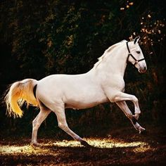 HORSE (@instahorse.co) • Instagram photos and videos Horses, Photo And Video, Videos, Photos, Animals, Instagram, Pictures, Animales, Animaux