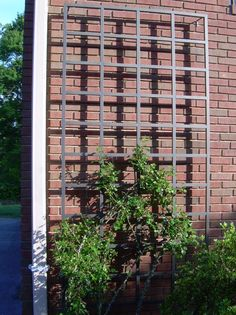 Trellis design takes a big part for both interior and exterior. Trellis is usually used for window, gate, and other need in house. In brief, it will be rare to find a house without trellis. Metal Garden Trellis, Wall Trellis, Arbors Trellis, Diy Trellis, Garden Arbor, Diy Garden, Trellis Ideas, Garden Ideas, Wrought Iron Trellis