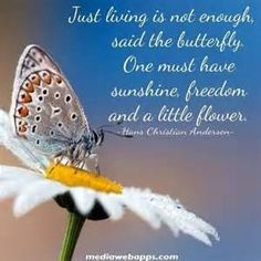 """""""Just living is not enough"""" - Hans Christian Anderson Butterfly Quotes, Flower Quotes, Butterfly Kisses, Butterfly Wings, Caterpillar Quotes, Beautiful Butterfly Pictures, Beautiful Butterflies, Sunshine Quotes, Rainbow Butterfly"""
